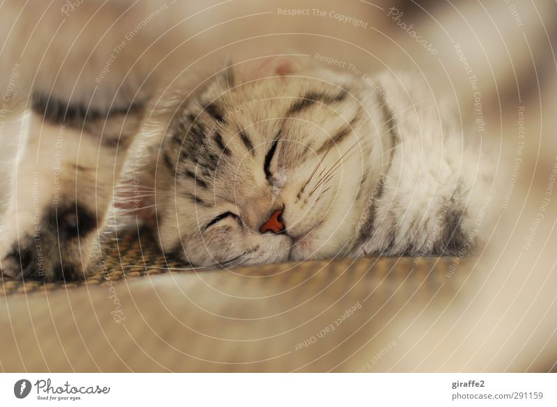 Cat Beautiful Red Animal Relaxation Emotions Brown Dream Friendship Lie Together Contentment Nose Warm-heartedness Sleep Cute