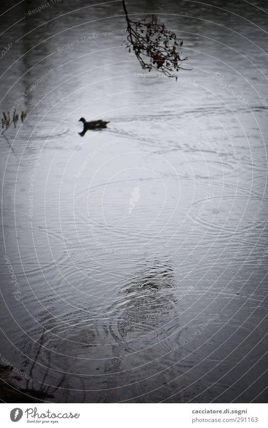 Water Loneliness Animal Black Dark Autumn Sadness Gray Rain Poverty Gloomy Threat Simple Lakeside End Pain