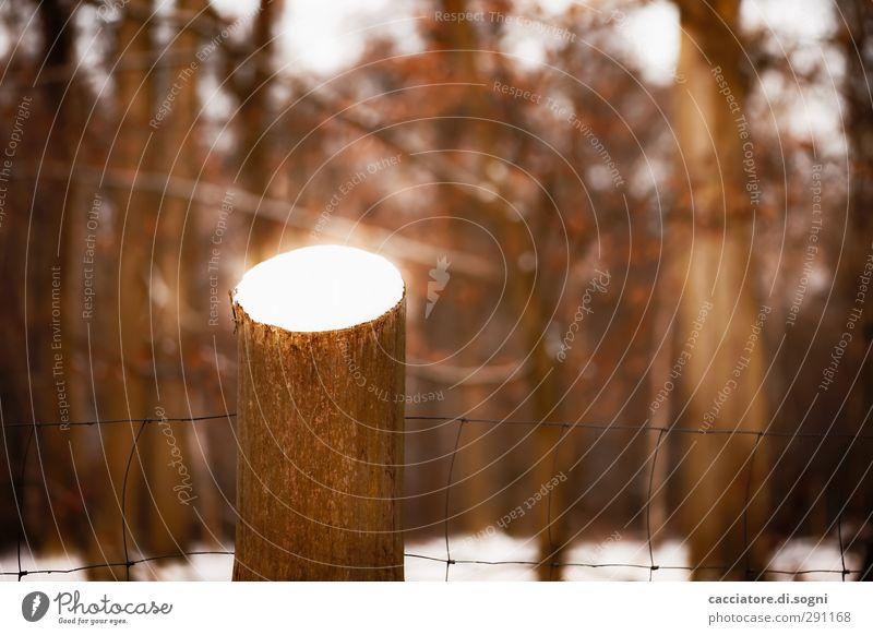 Tree Winter Landscape Forest Dark Brown Dream Exceptional Orange Fear Dangerous Threat Fantastic Hot Fence Pain