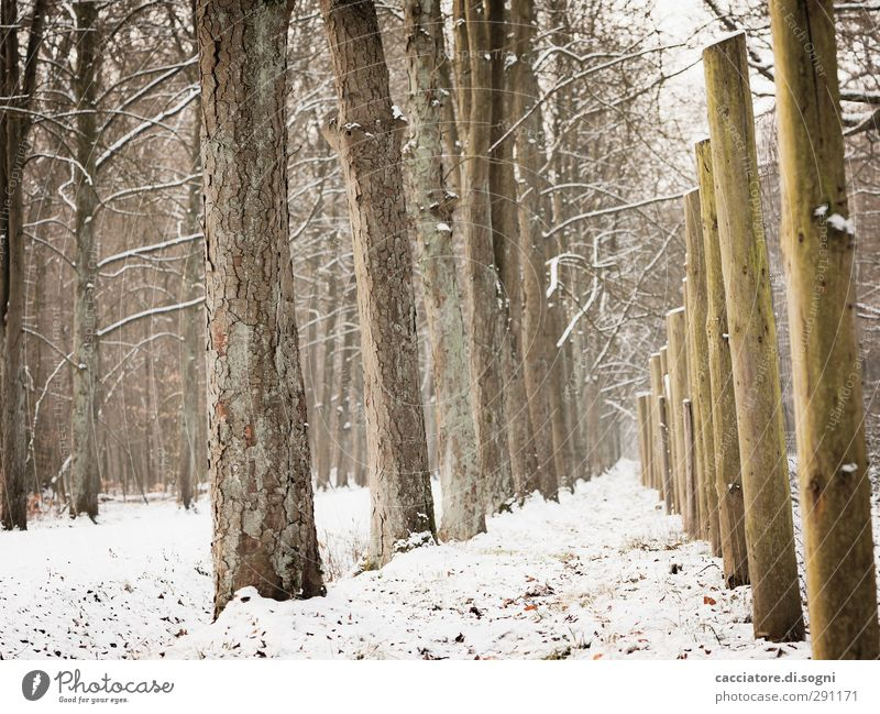 White Tree Loneliness Calm Winter Forest Lanes & trails Snow Wood Exceptional Brown Moody Line Esthetic Tall Joie de vivre (Vitality)
