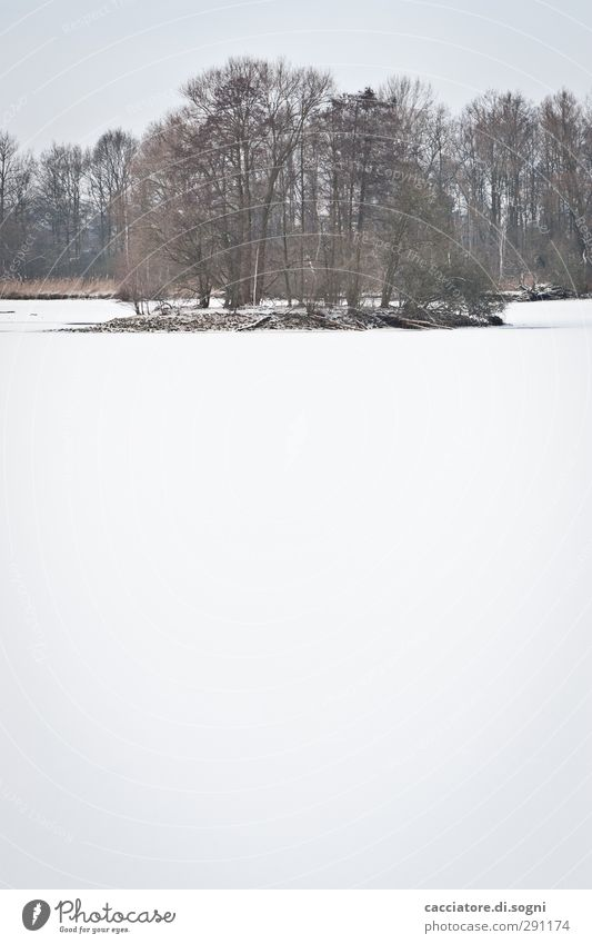 Beautiful White Tree Loneliness Winter Calm Landscape Far-off places Cold Snow Lake Bright Moody Island Idyll Esthetic