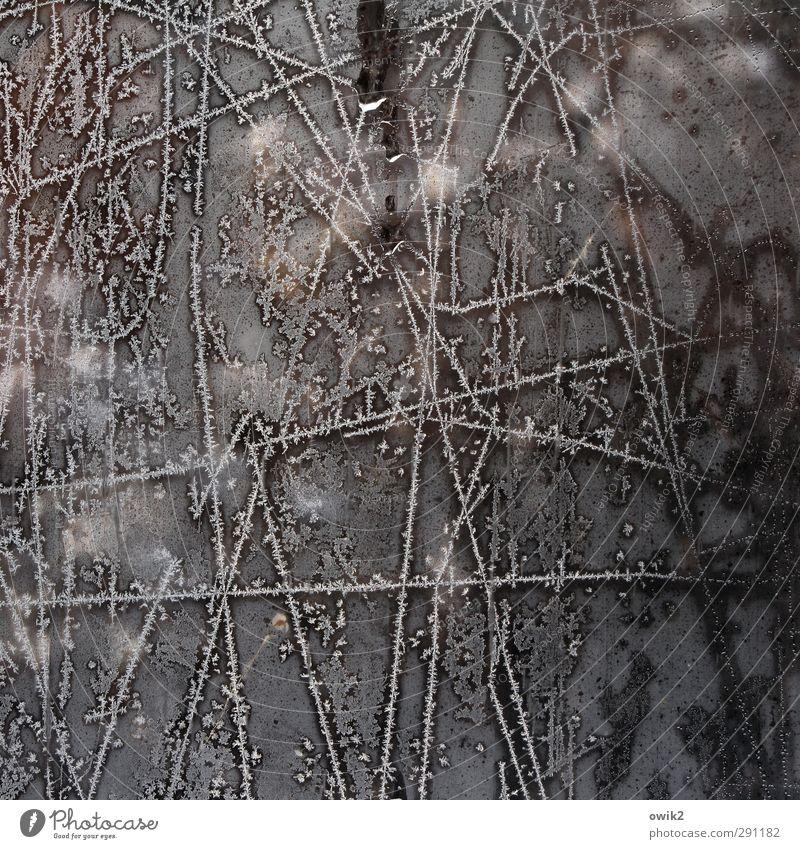 Nature Flower Winter Cold Line Ice Glittering Glass Illuminate Frost Frozen Freeze Window pane Frostwork Pane