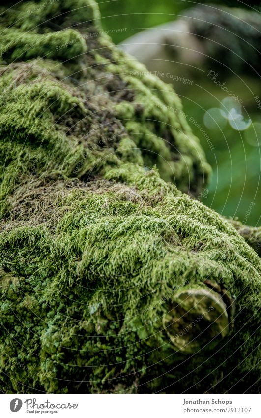 Moss on a tree Hiking Nature Landscape Tree Green Edinburgh Great Britain Pentland Hills Scotland structure National Park Carpet of moss Tree bark Overgrown
