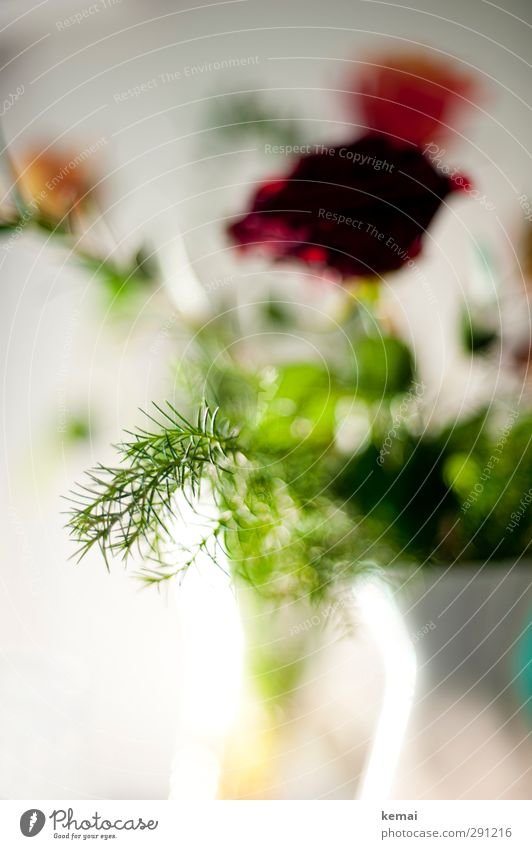 Greenzeuch included Plant Flower Rose Leaf Blossom Foliage plant Twig Vase Red White Colour photo Close-up Detail Deserted Day Light Blur Shallow depth of field