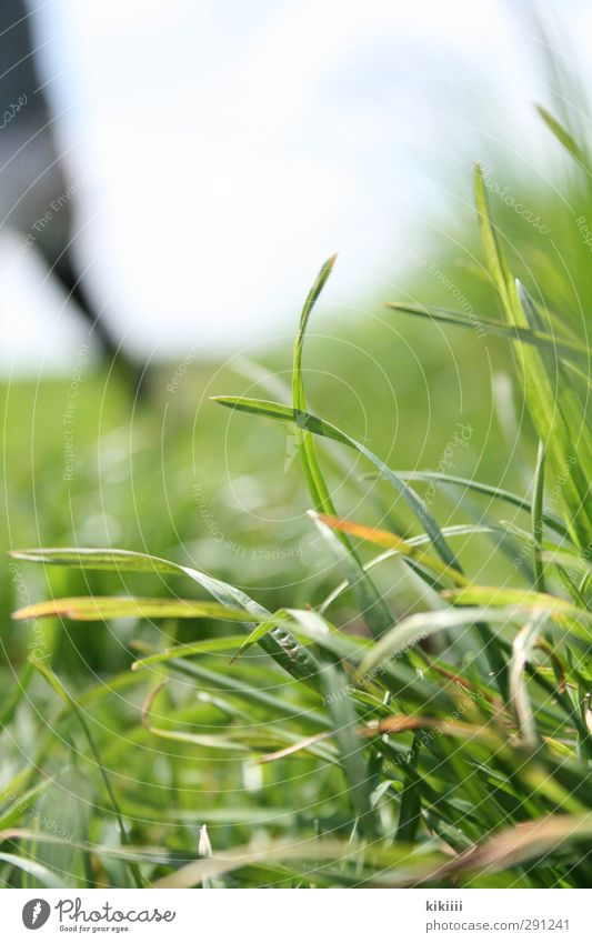Near and far Grass Meadow Blade of grass Green Human being Blur Shallow depth of field Sky Legs Muddled