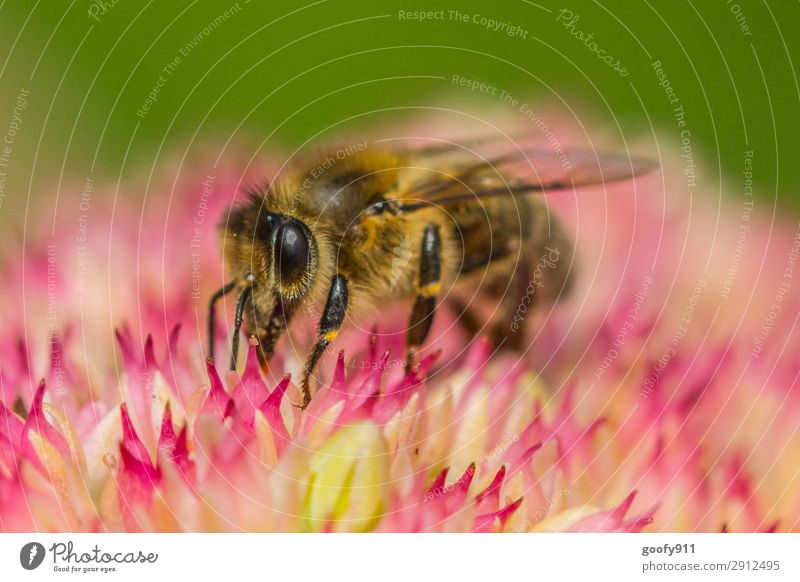 honey bee Trip Expedition Environment Nature Plant Animal Sunlight Spring Summer Flower Blossom Garden Park Meadow Farm animal Wild animal Bee Animal face Wing