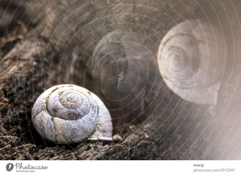 The dream world of the old snail Animal Dead animal Snail shell 1 Wood Spiral Lie Old Exceptional Dark Creepy Cold Natural Concern Grief Death Dream Reflection