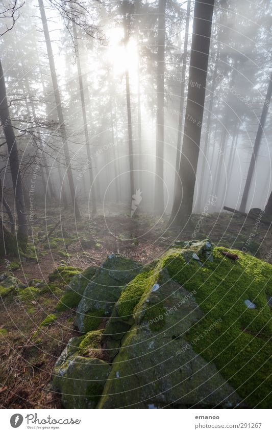 magic forest Vacation & Travel Trip Mountain Hiking Nature Landscape Plant Air Water Clouds Sun Climate Weather Fog Tree Hill Rock Bright Natural Beautiful