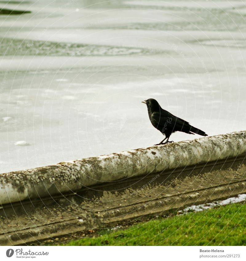 If it were summer now .... Environment Winter Ice Frost Park Bird Water Looking Stand Wait Infinity Cold Green Black White Moody Acceptance Self Control Concern