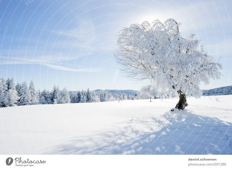 so, one tree I have left Vacation & Travel Winter Snow Winter vacation Mountain Hiking Sky Beautiful weather Tree Bright Blue White Black Forest Subdued colour