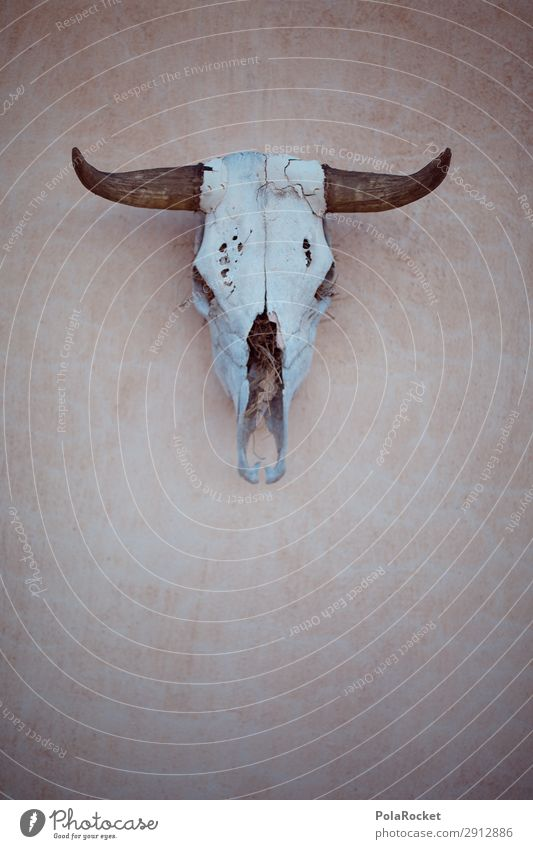 #A# spooky Art Esthetic Animal skull Death Ways of dying Look of death Mortal agony Decoration Antlers Wild West Dry Desert Dangerous End Game over
