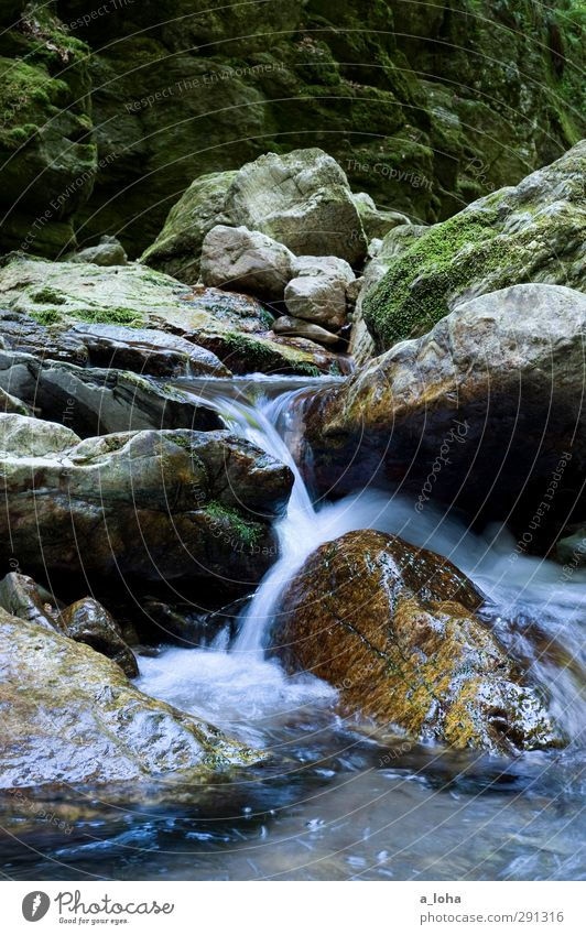 to go with the flow Environment Nature Elements Water Summer Moss Rock Alps Mountain Canyon Brook River Waterfall Stone Sharp-edged Fluid Wet Natural Clean Blue