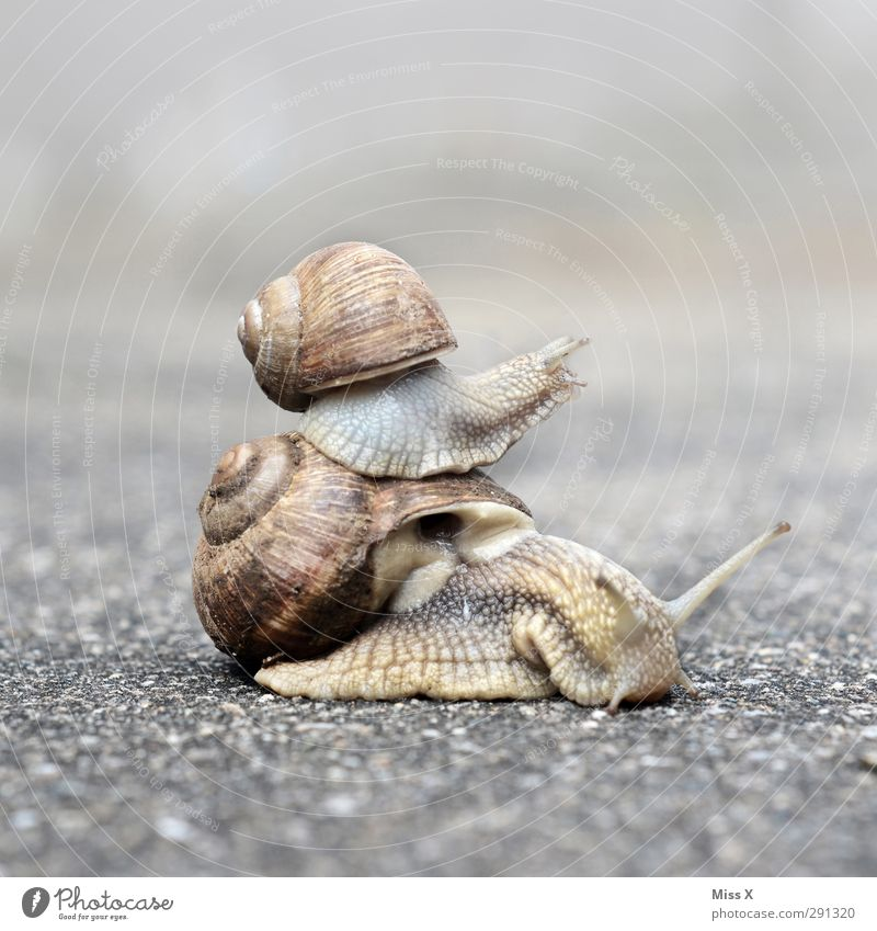 Daddy, hurry! Animal Snail 2 Baby animal Animal family Funny Crawl Family & Relations Snail shell Feeler Slowly Colour photo Subdued colour Exterior shot