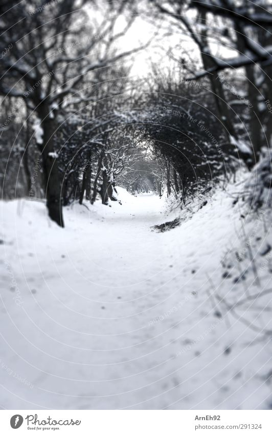 snow tunnel Nature Winter Snow Tree Bushes Forest Cold Black & white photo Exterior shot Deserted Day Contrast
