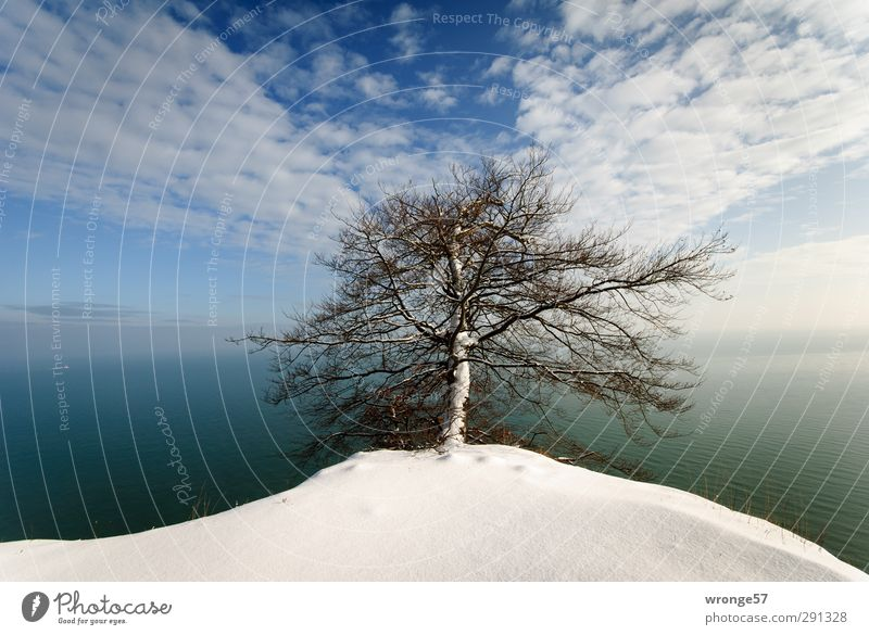 Tree at the cliff Nature Landscape Plant Earth Air Water Sky Clouds Horizon Winter Beautiful weather Snow Coast Baltic Sea Limestone rock Kreidefelsen Ledge