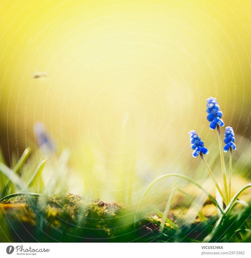 Nature Summer Plant Blue Landscape Flower Joy Background picture Lifestyle Yellow Spring Garden Wild Hyacinthus