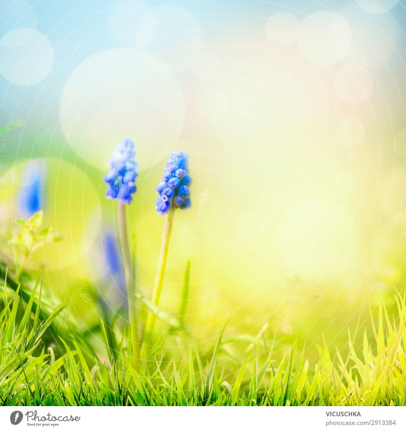 Spring nature background with wild hyacinths Lifestyle Design Summer Garden Nature Plant Beautiful weather Flower Blossom Meadow Blue Yellow grass sky