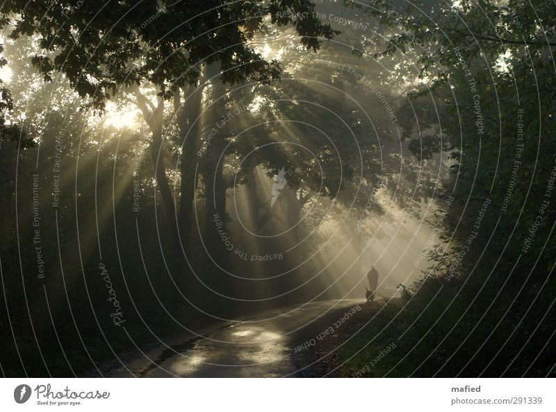 Way into the light Woman Adults Nature Sun Winter Beautiful weather Fog Tree Bushes Forest Dog Going Hiking Brown Yellow Gold Green Black Serene Calm Peace