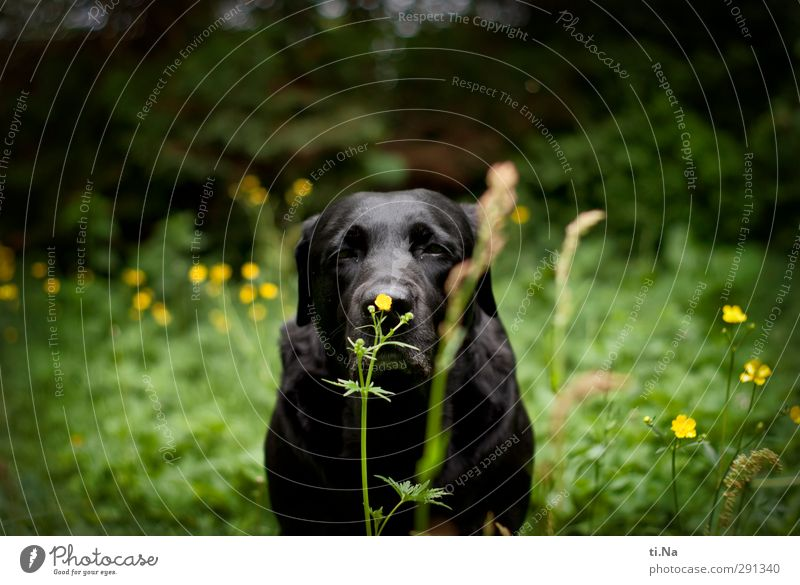 Dog Green Summer Flower Animal Black Yellow Meadow Grass Blossom Garden Bushes Blossoming Discover Pet Fragrance