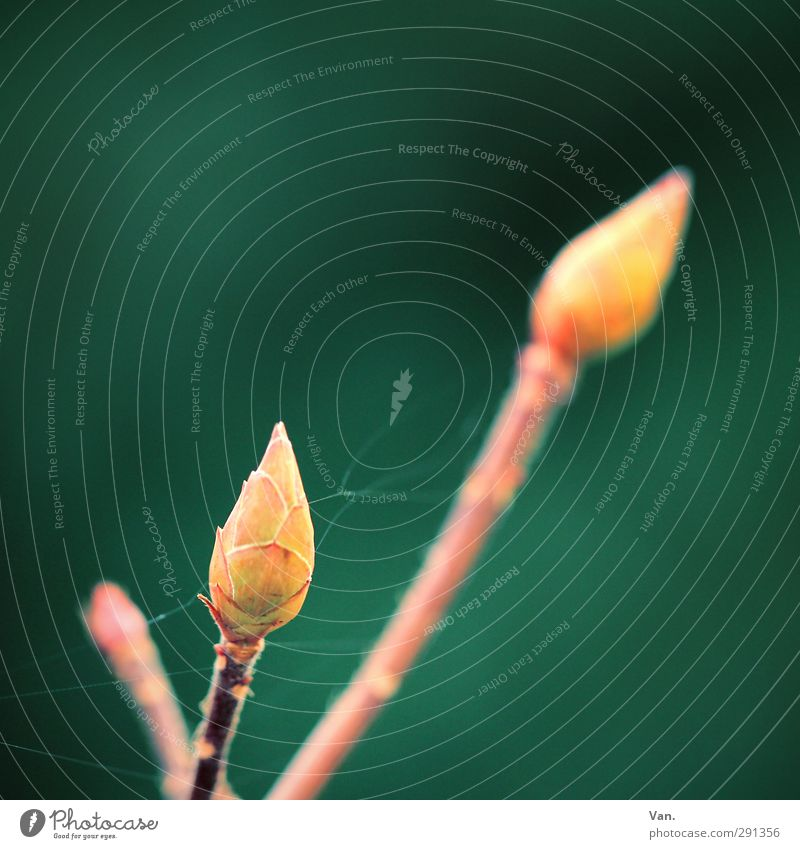 everything in the green area Nature Plant Foliage plant Leaf bud Twig Garden Yellow Green Spider's web Colour photo Multicoloured Exterior shot Close-up