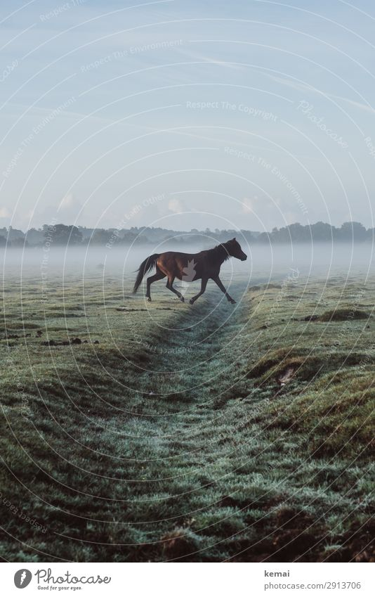 Horse crosses from left to right Life Harmonious Well-being Contentment Senses Relaxation Calm Leisure and hobbies Trip Adventure Freedom Nature Animal Sky