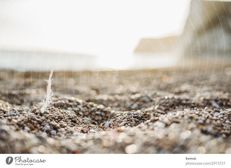 Feather on the beach Harmonious Well-being Contentment Senses Relaxation Calm Leisure and hobbies Vacation & Travel Trip Adventure Freedom Nature Landscape