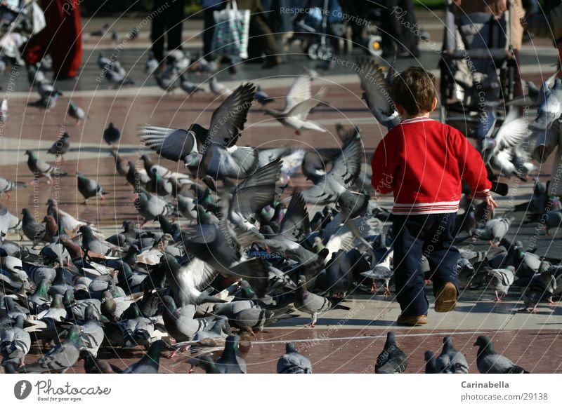 Child Playing Bird Running Europe Places Pigeon
