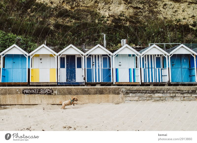private beach Lifestyle Harmonious Well-being Leisure and hobbies Playing Trip Sand Spring Beautiful weather Beach Hut Beach hut Changing room Pet Dog 1 Animal