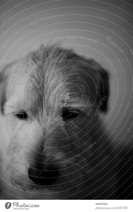 philosopher Animal Pet Dog 1 Philosopher Think Dream Sadness Far-off places Emotions Love of animals Romance Fatigue Disappointment Concern Moody Environment