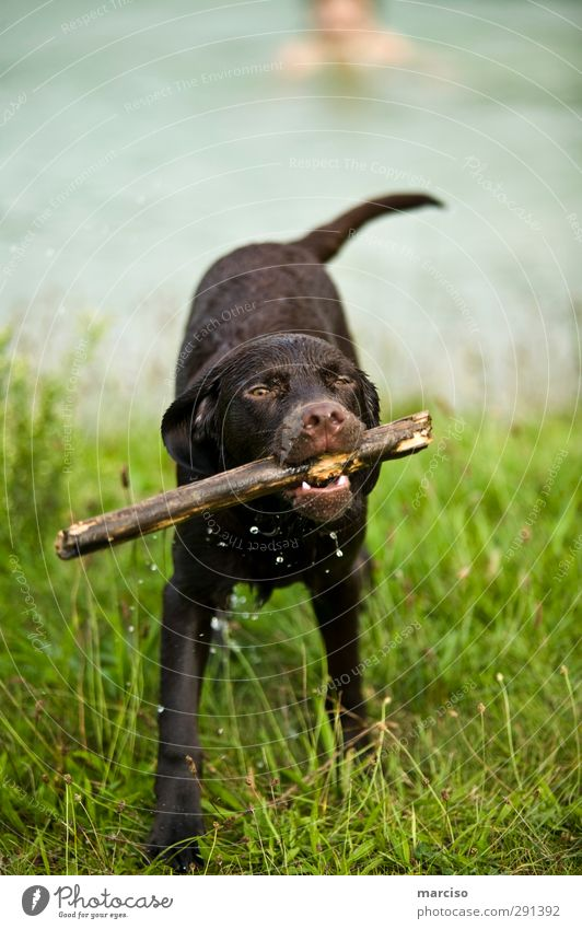 Dog Joy Animal Relaxation Environment Sports Baby animal Playing Wood Healthy Brown Friendship Power Leisure and hobbies Contentment Wet