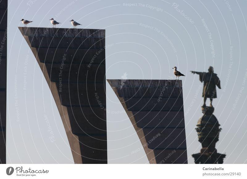 Columbus II Pigeon Statue Barcelona Obscure Columbus Monument