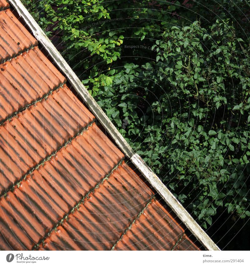 Well-groomed departure Beautiful weather Tree Leaf Branch Forest House (Residential Structure) Roof Roofing tile wind spring Old Authentic Sharp-edged Historic