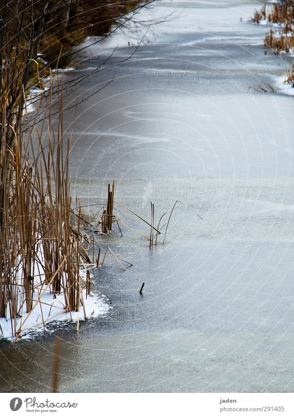 Ice cold. Frost Snow Cold Water Water ditch River Brook Winter Common Reed Frozen surface Freeze Landscape Exterior shot