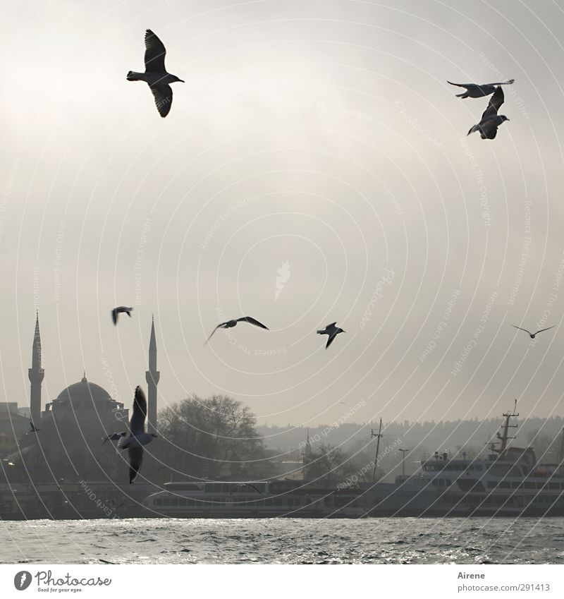 in the morning at the Bosporus Far-off places Freedom Sky Winter Fog Coast Ocean Istanbul Turkey Town Skyline Deserted Building Mosque Minaret The Bosphorus