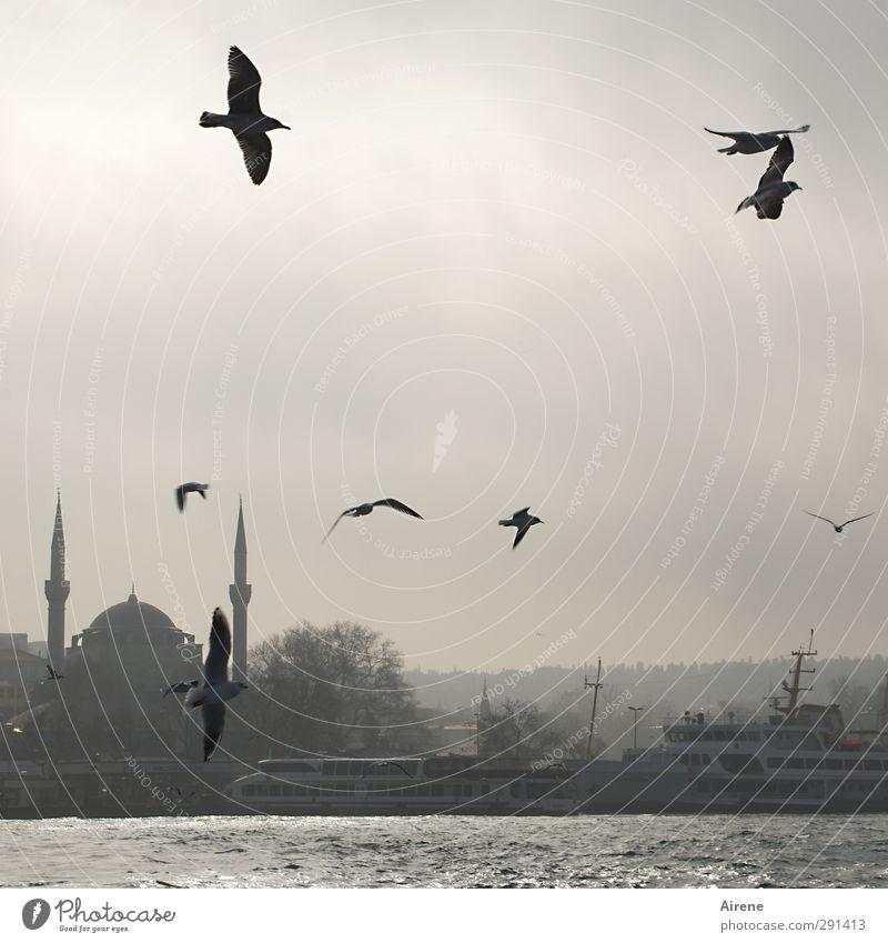 Sky City Ocean Animal Winter Black Far-off places Movement Gray Freedom Coast Building Bird Flying Fog Elegant