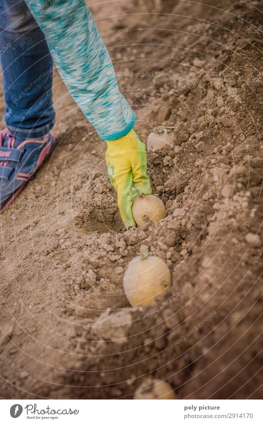 Child's hand digging in a potato Lifestyle Leisure and hobbies Girl Boy (child) Family & Relations Infancy Youth (Young adults) Hand 3 - 8 years 8 - 13 years