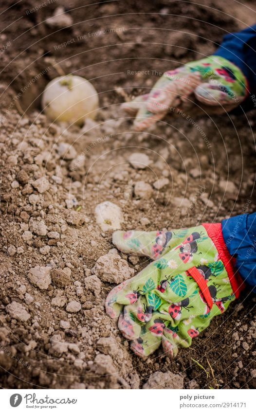 Children's hand with gloves digging in a potato Human being Infancy Youth (Young adults) Life Hand 1 - 3 years Toddler 3 - 8 years Environment Nature Elements