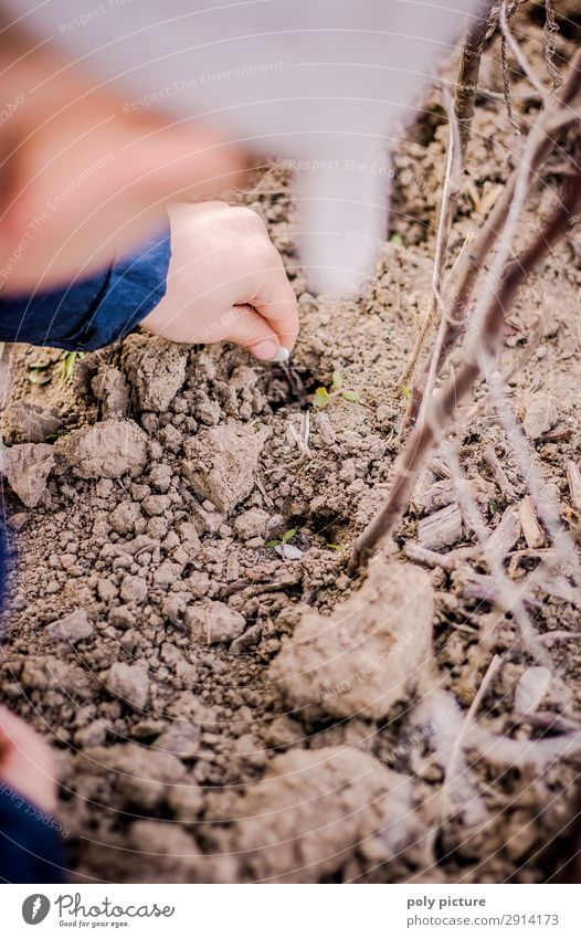 Child puts bean seeds into the soil Leisure and hobbies Playing Toddler Boy (child) Infancy Youth (Young adults) Arm Hand 1 Human being 1 - 3 years 3 - 8 years