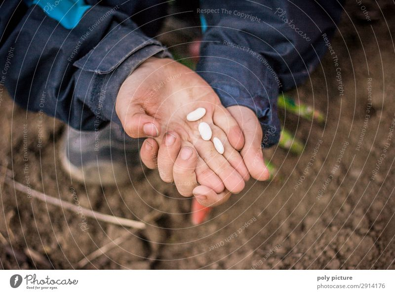 Child holds bean seeds in her hand Lifestyle Leisure and hobbies Playing Boy (child) Infancy Youth (Young adults) Hand Fingers 1 Human being 8 - 13 years