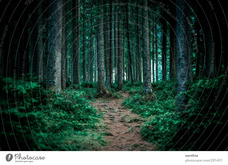 path Nature Summer Forest Dark Calm Loneliness Fear Beginning Discover Horizon Idyll Environment Trust Irritation Lanes & trails Far-off places Footpath