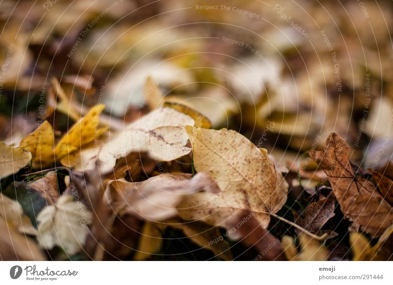 macrocosm Environment Nature Autumn Leaf Deciduous forest Forest Natural Brown Decline Dry Colour photo Subdued colour Exterior shot Close-up Detail