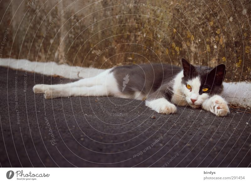 chilly Wall (barrier) Wall (building) Street Cat 1 Animal Relaxation Lie Authentic Original Serene Boredom Contentment Street cat Colour photo Subdued colour