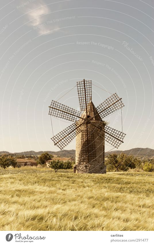 Still 10 weeks to summer time Landscape Plant Sky Horizon Summer Beautiful weather Field Manmade structures Facade Old Windmill Windmill vane Grain field 6