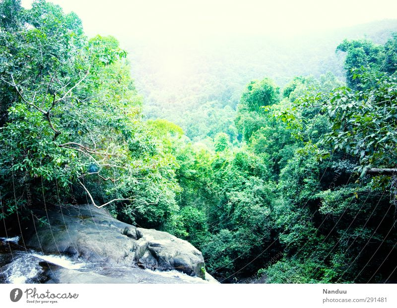 into the jungle Nature Landscape Virgin forest Rock Canyon Bright Panorama (View) Waterfall Green Fog Colour photo Exterior shot Deserted Copy Space top