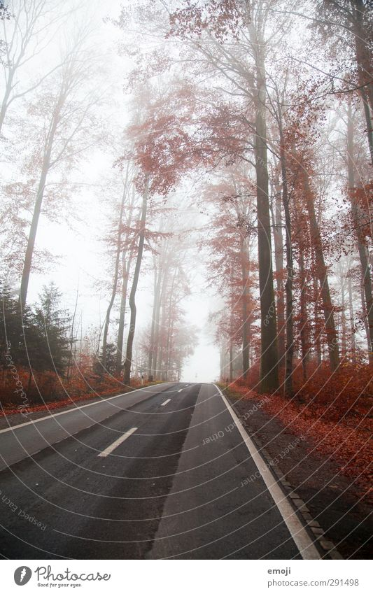 Nature Tree Red Landscape Forest Environment Cold Street Fog