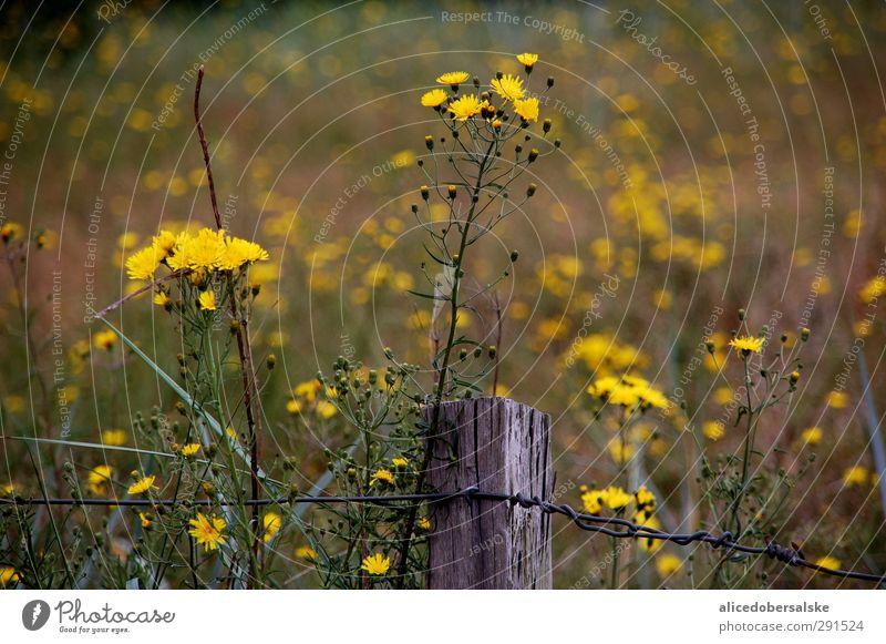 Nature Green Summer Plant Sun Ocean Beach Black Yellow Environment Meadow Movement Gray Coast Blossom Wind