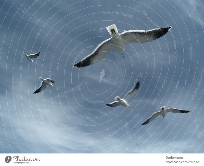 seagull squadron Bird Group of animals Flying Hunting Together Blue Power Agreed Loyal Friendship Love of animals Fear of flying Relationship Arrangement