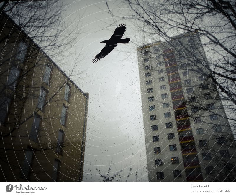 Warning bird on screen surrounded by prefabricated concrete slabs Drops of water Sky Winter Rain Ice Frost Marzahn Prefab construction Tower block Bird of prey