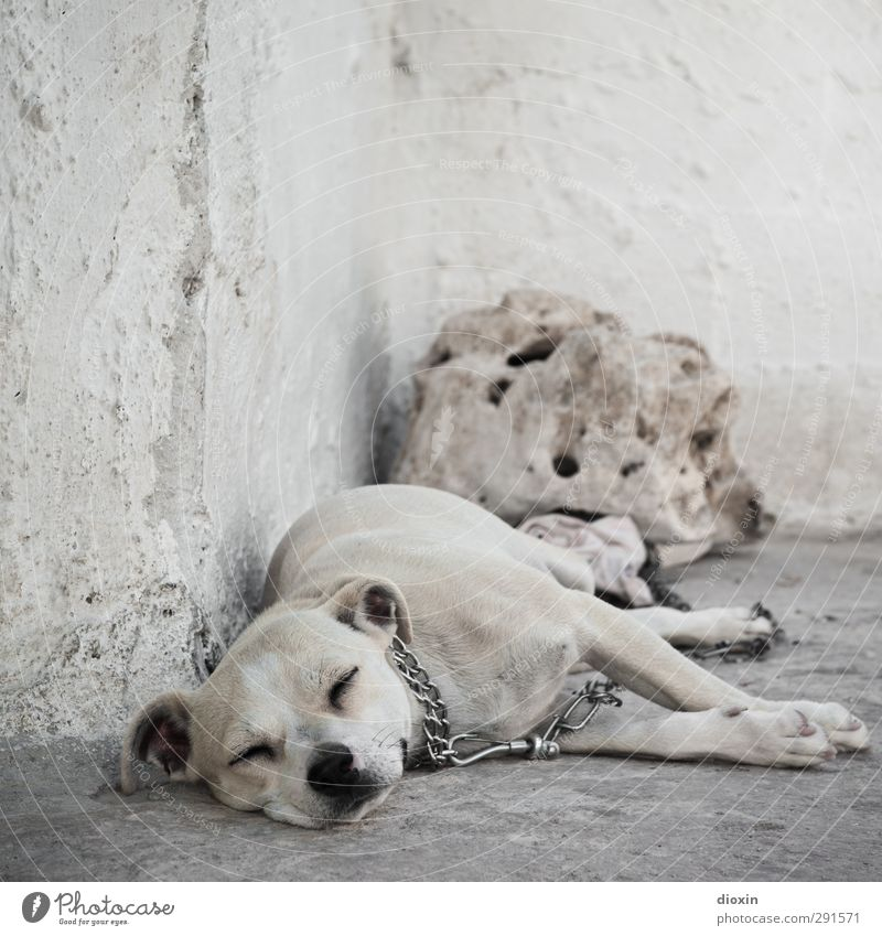 lazy animal Warmth Wall (barrier) Wall (building) Animal Pet Dog 1 Lie Sleep Serene Calm Indifferent Comfortable Relaxation Boredom Goof off Watchdog