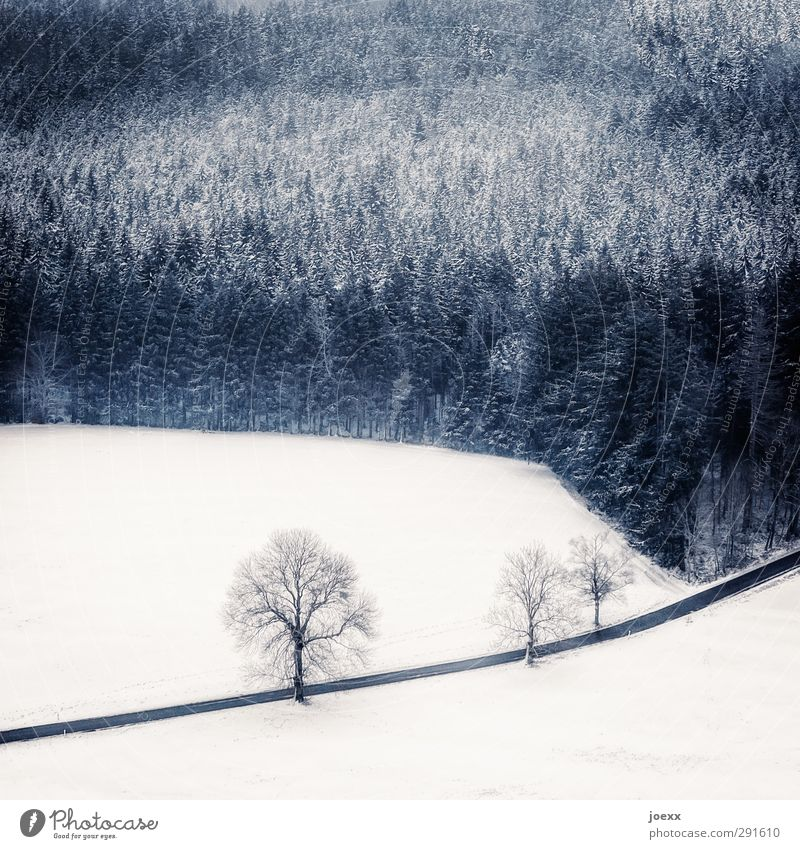 Blue White Tree Winter Landscape Black Forest Cold Street Snow Lanes & trails Weather Tall